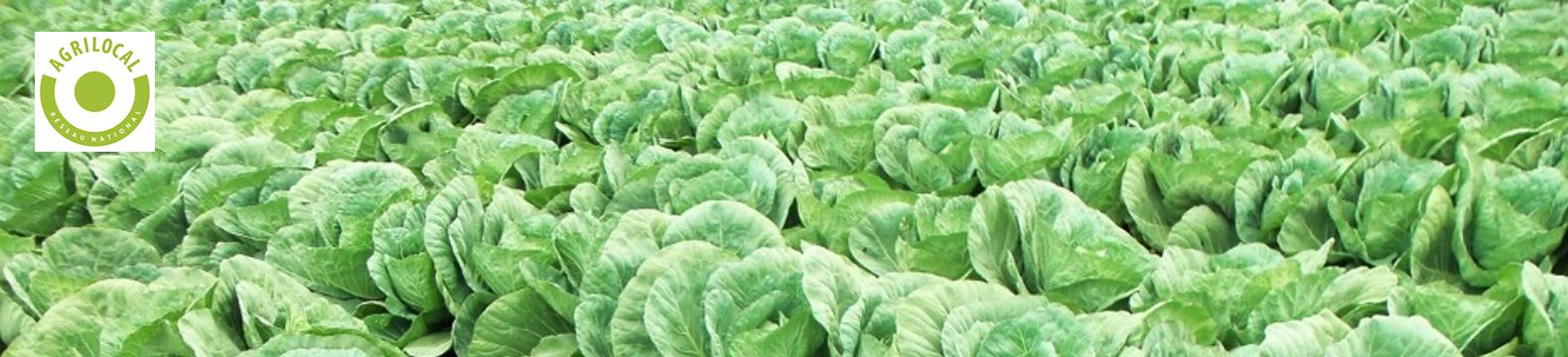 Agrilocal, la proximité fait recette !