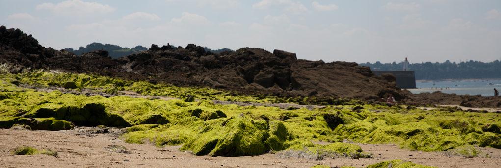 Une nouvelle étape dans la lutte contre les algues vertes