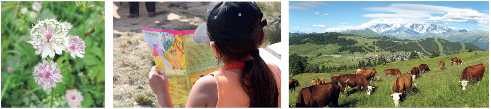 Le pastoralisme Savoie Mont-Blanc : mise en place d'une politique commune