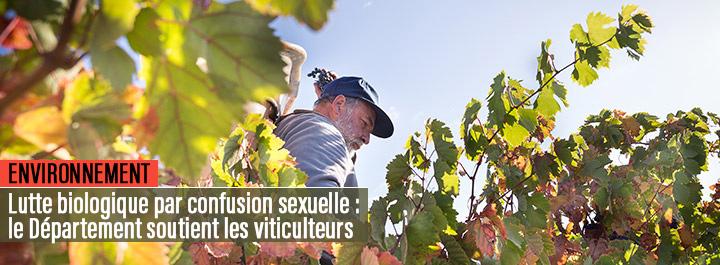 Confusion sexuelle : l'Aude soutient les viticulteurs